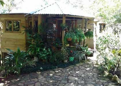 https://www.ganjavacations.net/wp-content/uploads/2021/07/Mels-Botanical-Retreat.jpg